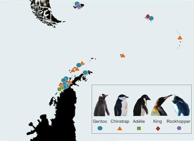 Ecco come sono distribuiti i pinguini