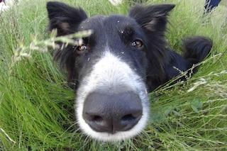 Le 6 condizioni cliniche che i cani rilevano grazie al loro super olfatto