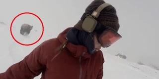 Il virale dell'orso che insegue una sciatrice: 10 ragioni per ritenerlo un fake