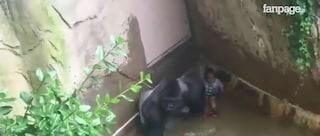 L'uccisione del gorilla Harambe ci racconta perché gli zoo dovrebbero chiudere