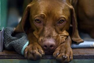 Sappi che il tuo cane non ti crede quando sei arrabbiato, ecco perché