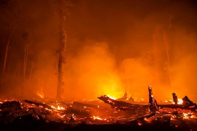 Le foreste vergini vengono rase al suolo e il terreno incendiato per far spazio alla palma da olio