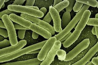 Creato un intero batterio sintetico 'compresso', è l'inizio della vita 'su misura'