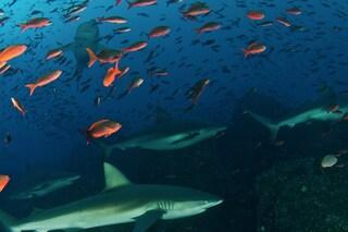 Il paradiso degli squali si trova nelle Galapagos, ecco perché