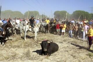 Adiós! Stop della Spagna a violenze e uccisione del Toro de la Vega