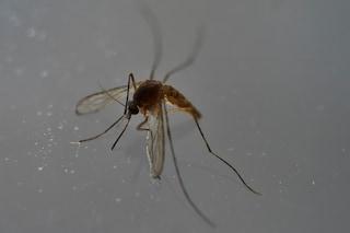 No alle Olimpiadi a Rio, gli scienziati sono preoccupati per il virus Zika