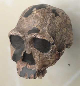 Le più antiche orme di Homo erectus scoperte in Eritrea