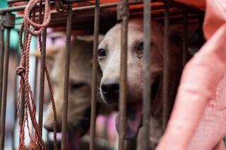 Festival della carne di cane di Yulin: 30 milioni le vittime ogni anno