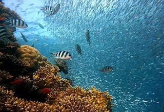 I coralli zombie minacciano l'ecosistema della barriere tropicali