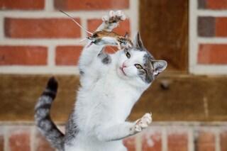 I gatti conoscono le leggi della fisica per questo sono abili predatori