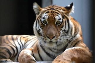 Giornata dell'Ambiente, insieme contro il traffico illegale di animali