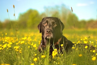 Finalmente arriva l'antiveleno che salva la vita dei nostri cani