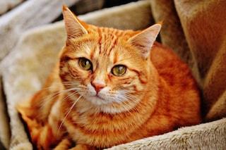 Quanto a lungo vivrà il tuo gatto? Controlla questi sintomi per capirlo