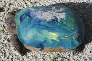 Dovete smettere di dipingere le tartarughe, è pericoloso