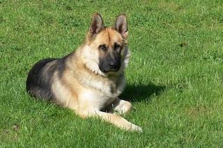Abbandonare il cane in giardino è un reato, lo conferma la Cassazione