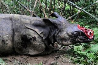 Giornata del Rinoceronte: tra 30 anni esisterà solo nei nostri ricordi