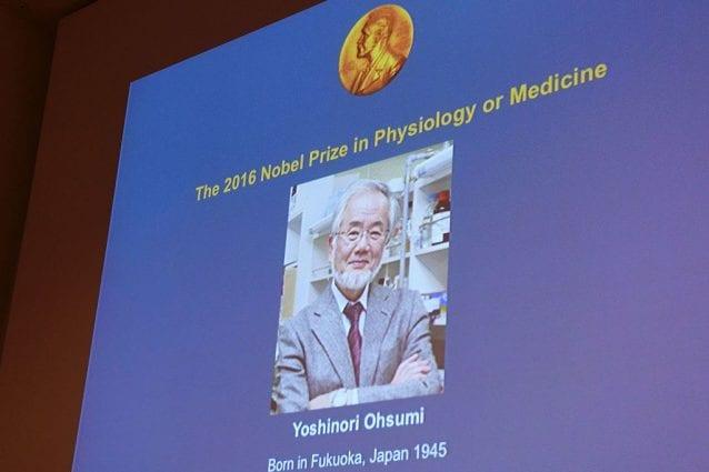 La foto di Yoshinori Ohsumi presso il Nobel Forum di Stoccolma, dopo l'annuncio dell'assegnazione del premio Nobel per la medicina. (Credit: JONATHAN NACKSTRAND/AFP/Getty Images)