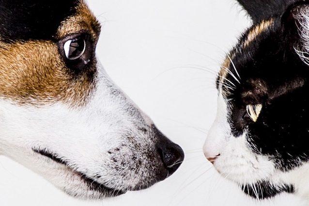 I Cani Sono Più Intelligenti Dei Gatti Vincono La Sfida Con Il