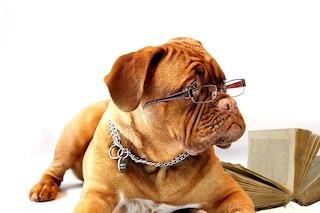 I cani 'immaginano' quello che diciamo: il cervello funziona al contrario rispetto al nostro