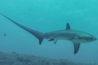Lo squalo che ha salvato un'isola con la sua passione per l'igiene
