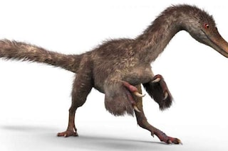 Straordinaria scoperta in Birmania: nell'ambra c'è una coda piumata di dinosauro