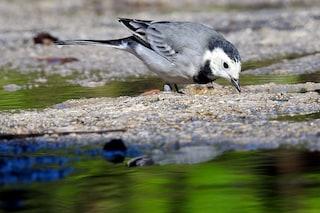 Gli uccelli muoiono a causa del riscaldamento globale: non sanno più quando migrare