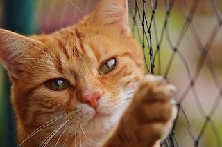 Influenza aviaria trasmessa da gatto a uomo, primo caso a New York