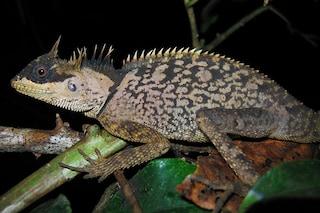 Scoperte 163 nuove specie nel Mekong, ecco quelle più affascinanti