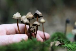 I funghi allucinogeni combattono la depressione e l'ansia nei malati di cancro