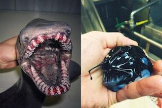 Roman, il pescatore russo specializzato nel catturare mostri marini