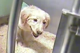 Sperimentazione: perché è inutile e cosa subiscono gli animali a causa nostra