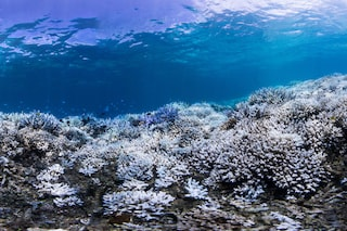 È morto il 70% della barriera corallina in Giappone: cosa sta succedendo