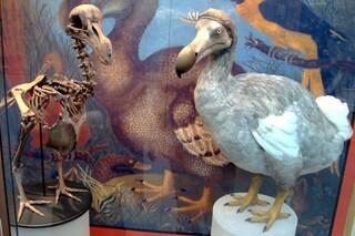 Ecco come stiamo riportando in vita 11 specie di animali estinte