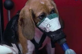Perché 200 scienziati italiani vogliono continuare a sperimentare sugli animali