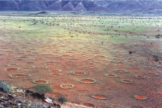 Svelato il segreto dei misteriosi Cerchi della Fate che si formano in Namibia