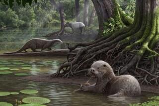 Lontra gigante trovata in Cina: è di 6 milioni di anni fa ed era grande come un lupo