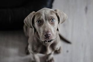 I cani hanno il senso del tempo: sfatato un mito