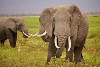 Stop al commercio di avorio nel 2017: svolta storica della Cina a favore degli elefanti