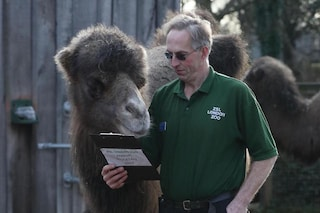Censimento allo Zoo di Londra, iniziata la conta dei 18mila animali: ecco come funziona