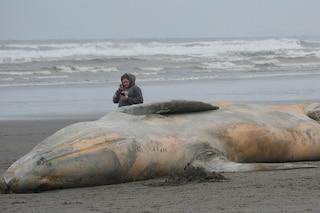 Spiaggiamento: le tempeste solari mandano in tilt i cetacei? Così muoiono gli animali
