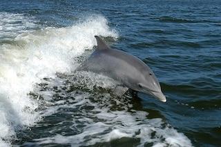 Umani come delfini: così possiamo allenarci a trovare gli oggeti con l'eco