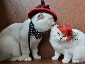 Gatti in mostra (Getty).