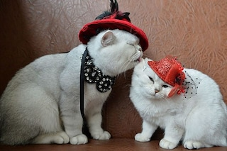 Le feste del gatto? 17 febbraio, 8 agosto e 17 novembre