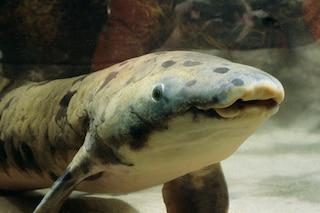 Nonno è morto, era il pesce più anziano del mondo in uno zoo da 84 anni
