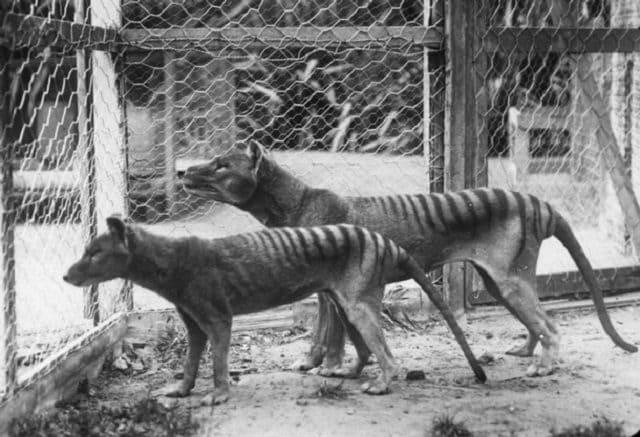 Esemplari esposti in uno zoo
