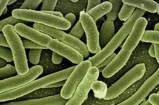 Sclerosi multipla: batteri dell'intestino contrastano la malattia. Cosa sono i farma-microbi
