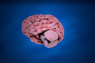 Il cervelletto ha una nuova e inaspettata funzione