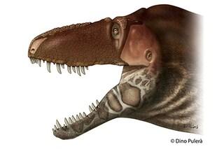 È lui il tirannosauro 'tenero' che si baciava con il muso
