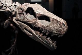 """""""Ci siamo sbagliati per 130 anni"""": l'albero evolutivo dei dinosauri è tutto da rifare"""