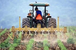 Gli italiani vogliono salvare le api e la nostra salute con questo diserbante ecologico